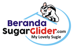 Logo Beranda Sugar Glider